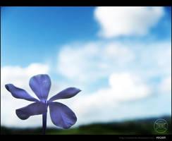 'Purple Flower' by MastaHicks