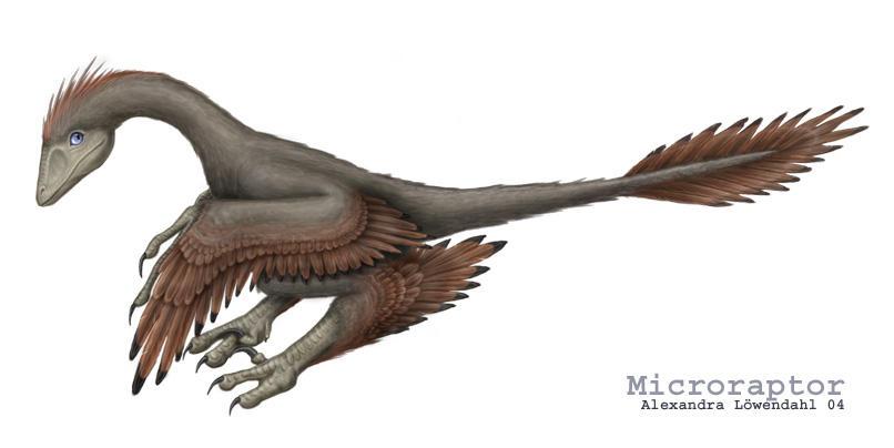 Microraptor. by Isdrake