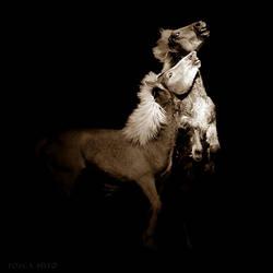 Haflinger by vadalein