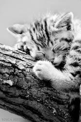 sleepy by vadalein