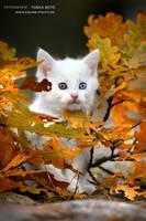 leaves. by vadalein