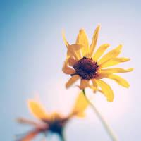 Hello Sunshine by Olivedrab