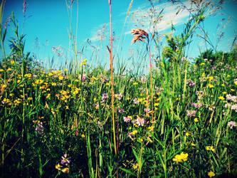 Weeds by evelynrosalia