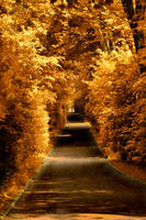 Golden Path by DynOpt