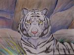 White Tiger by Kiriko-Windgeist