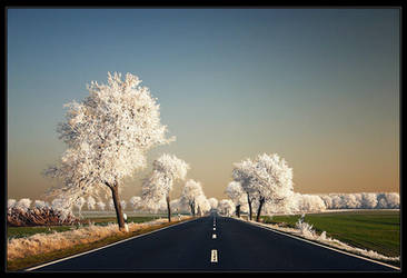 Dreams Way by Sesjusz