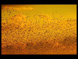 birds, 10.8.2007 by Sesjusz
