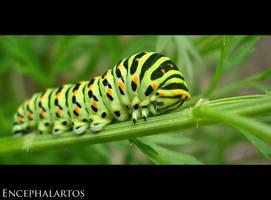Beauty before Flight by Encephalartos