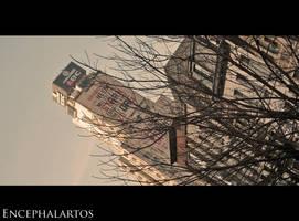 ABC by Encephalartos