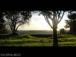 Look South by Encephalartos