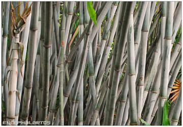 Simply Bamboo by Encephalartos