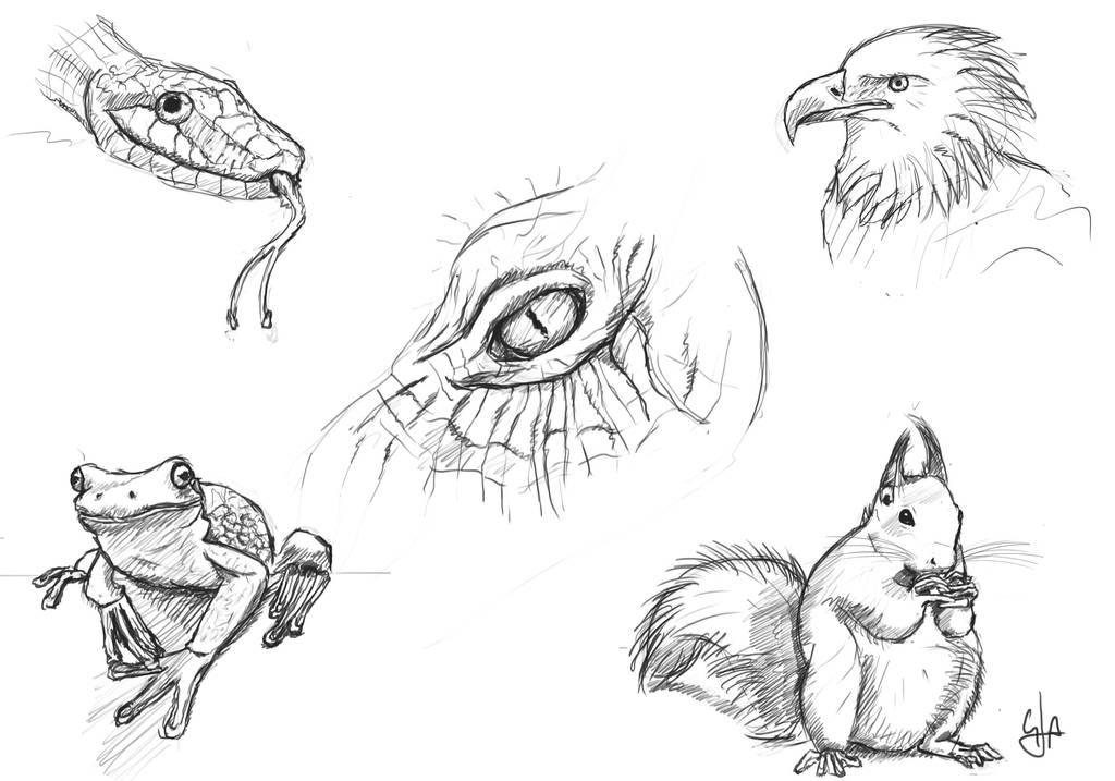 Image of: Biology Kingdom Animalia By Programmega Deviantart Kingdom Animalia By Programmega On Deviantart