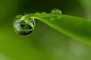 Dew Drop Refraction 26 by Alliec