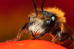 Miner Bee 11 by Alliec