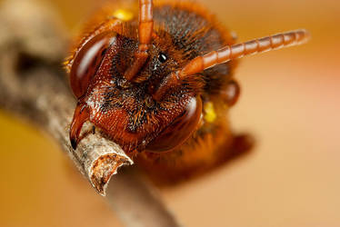 Sleeping Bee 2 by Alliec