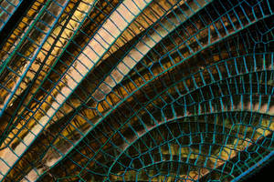 Banded Demoiselle Wing Detail by Alliec