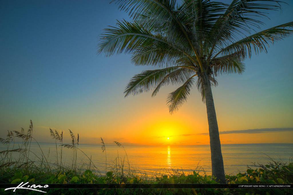 Shemale dating on the treasure coast of florida