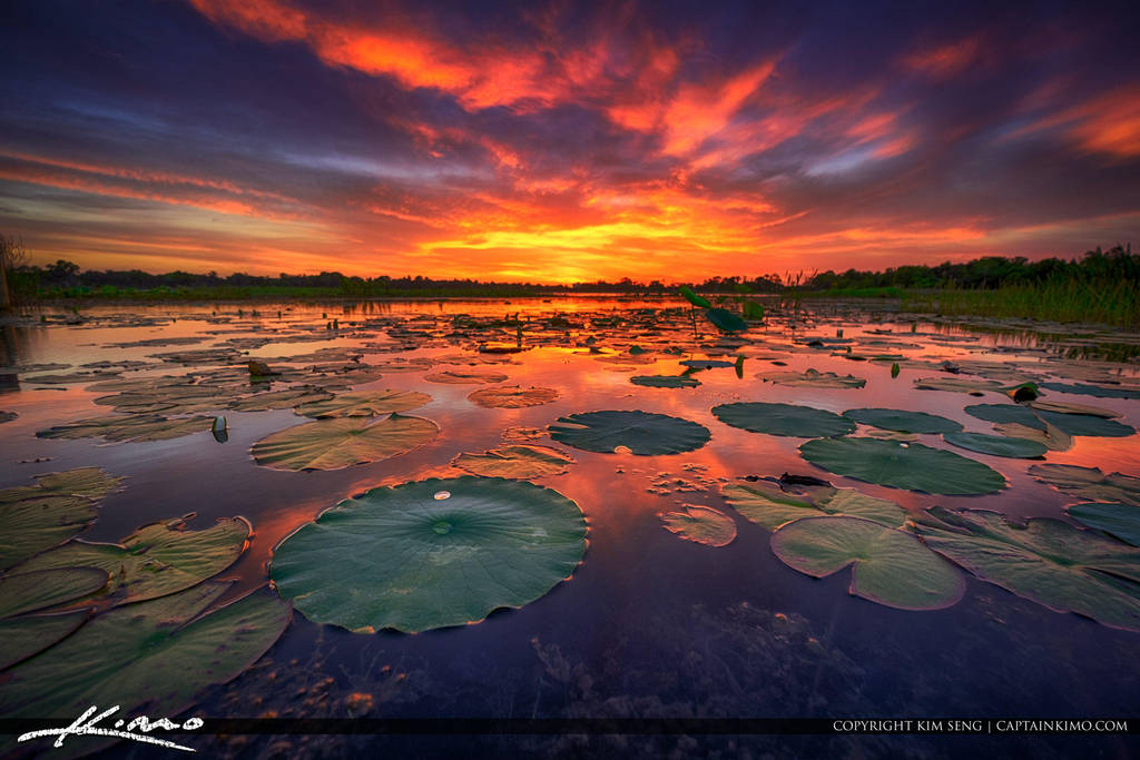 Sunset-at-a-Lake-in-Kissimmee-Florida by CaptainKimo