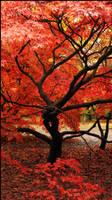 Maple Autumn by JackEavesArt