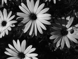 Flowers by ScottandMel
