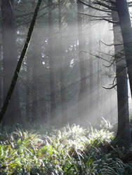 Oregon Sun by brycejenks84