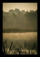 Early morning by tomir