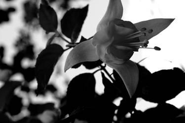 monochrome beauty by Karaluch