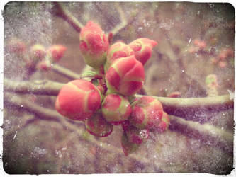 Spring Time - New Beginning by Karaluch