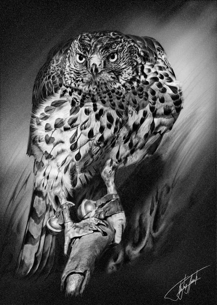 Hawk 2 by BojanPapic