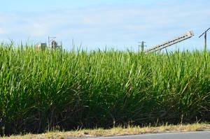 Sugar cane country by iskarlata
