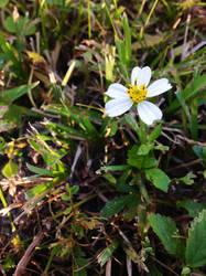 A familiar flower by Issun-mini