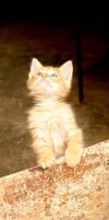gatolargo by emilie-cat