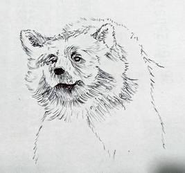 Balu Sketch by zebarnabe