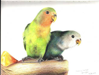 Lovebirds by Silver-cyu