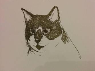 Cat sketch by maciekszlachta