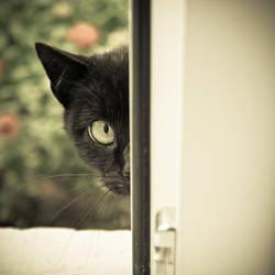 Meow? by ukapala
