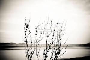 November by ukapala