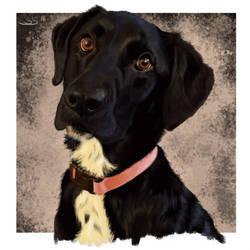 Labrador Retreiver by FnkMstr74