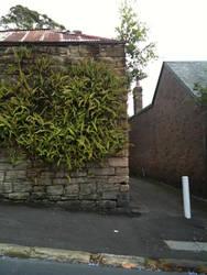 wall ferns by serp-stock