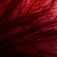 .red by immugraah