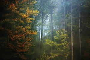 Blue mist. by immugraah