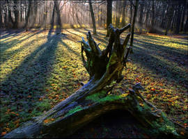 Light on the dead tree I by AStoKo