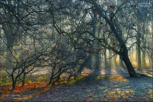 Whispering forest 1 by AStoKo