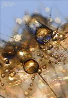 Golden 1 by AStoKo