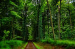 Forest path Wood Trees ~ Stock AStoKo by AStoKo