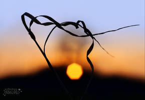Sunset impressions by AStoKo