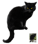 Black cat ~ Halloween VS STOCK by AStoKo