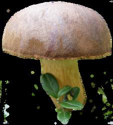 mushroom 8 STOCK by AStoKo