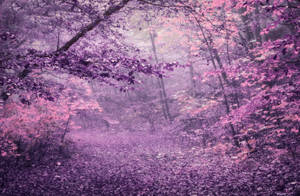 Purple Autumn Forest STOCK by AStoKo by AStoKo