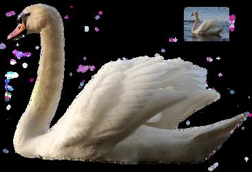 Swan 5 png FREEBIE STOCK by AStoKo by AStoKo
